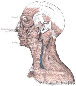 Head-Face-Shoulder